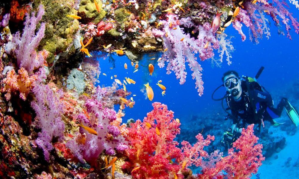 tubbataha-reef-saildiving